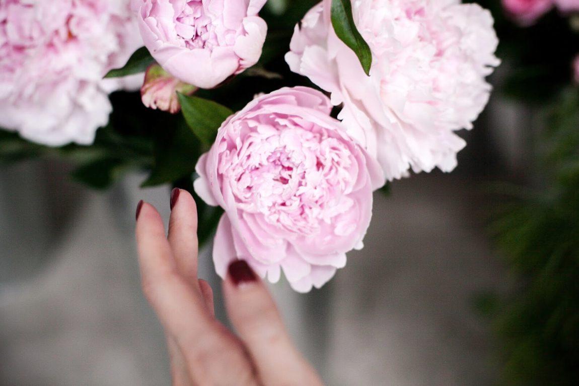 Блог о флористике Маши Кравченко   каталог срезанных цветов