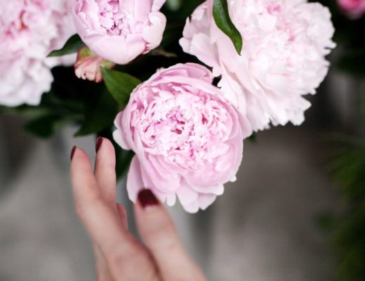 Блог о флористике Маши Кравченко | каталог срезанных цветов